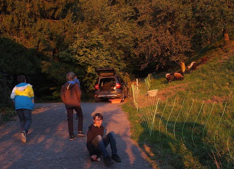 Ankunft der Schafe in Malchen 7