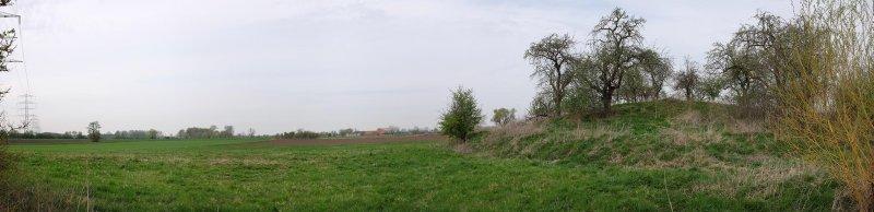 Steinkauzröhren bei Motte Wellberg 1