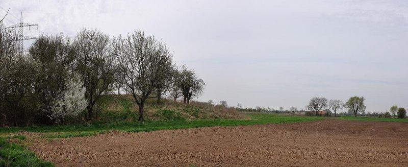 Steinkauzröhren bei Motte Wellberg 2