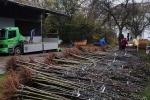 Vorbereitung NABU-Obstbaumaktion 06