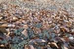 Erdkröten-Flut 6
