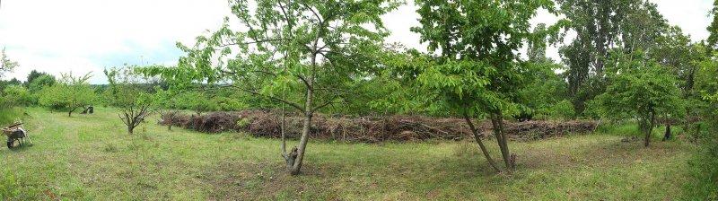 Neue Weide mit Naturzaun 3