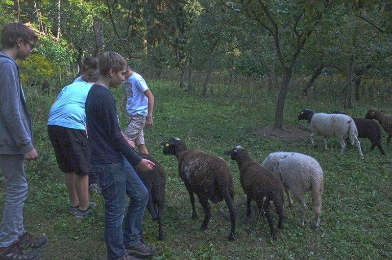 NAJU Gruppe bei den Schafen 01