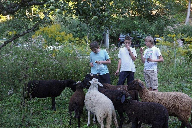 NAJU Gruppe bei den Schafen 06