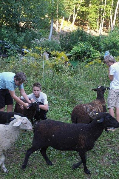 NAJU Gruppe bei den Schafen 07