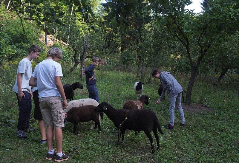 NAJU Gruppe bei den Schafen 02