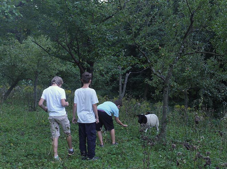 NAJU Gruppe bei den Schafen 04