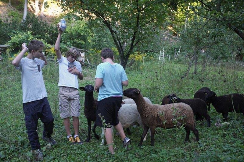 NAJU Gruppe bei den Schafen 05