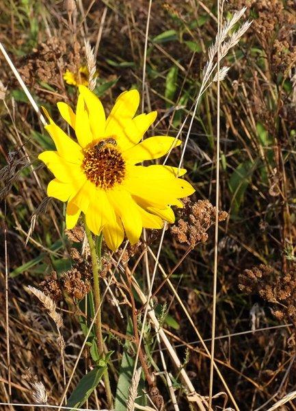 letze Blüten auf der Bienenweide