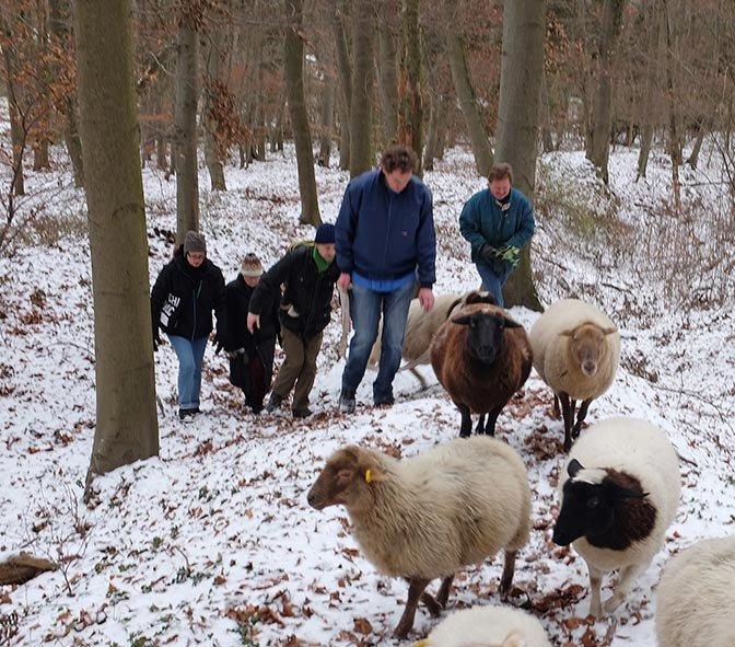 Waldwanderung mit Schafen 08
