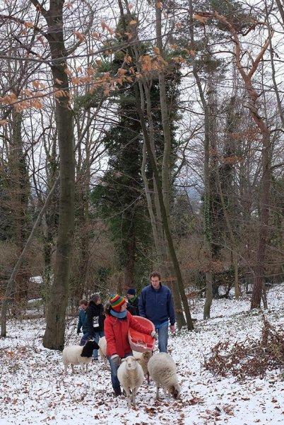 Waldwanderung mit Schafen 03