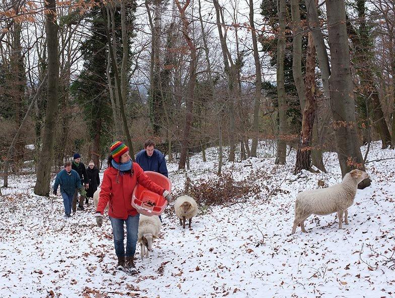 Waldwanderung mit Schafen 04