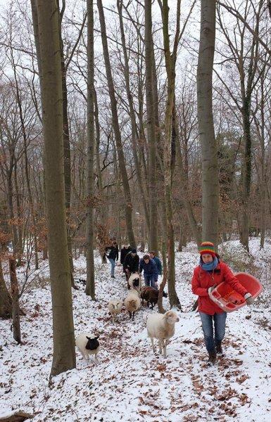 Waldwanderung mit Schafen 06