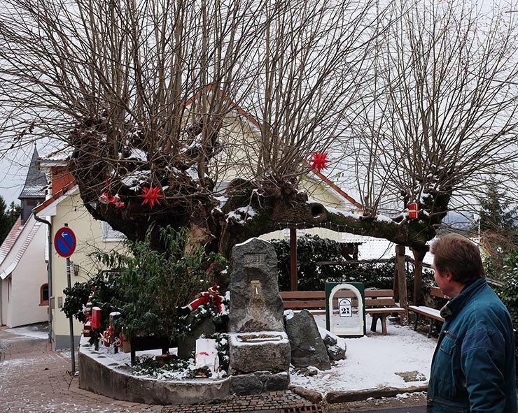 Weihnachtliche geschmückte Dorflinde Malchen