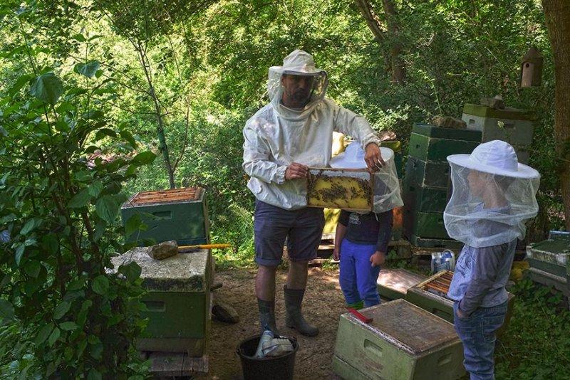 Honigernte 1