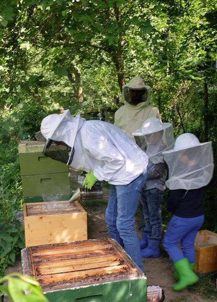 Honigernte 2
