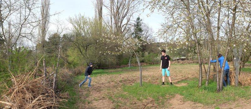 Götterbaumweide