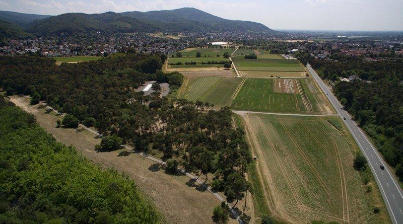 Luftbild Bickenbacher Düne 05