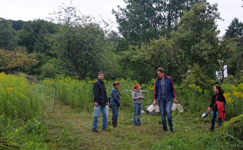 Schafgruppe auf der Bienenweide 3