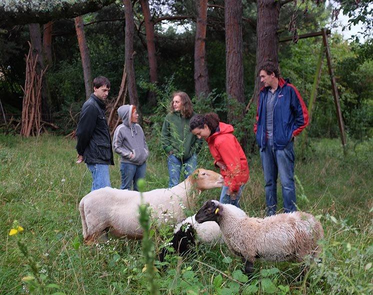 Schafgruppe bei der Böckchenherde 3