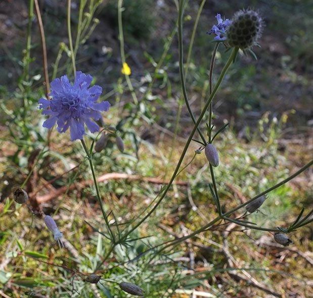 Pflanzen auf der Seeheimer Düne 5