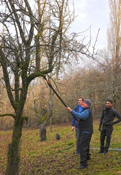 Baumschnitt Bipsweide 09