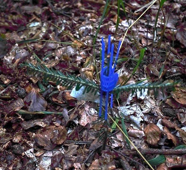 Waldeinsatz Weisstannenschutz
