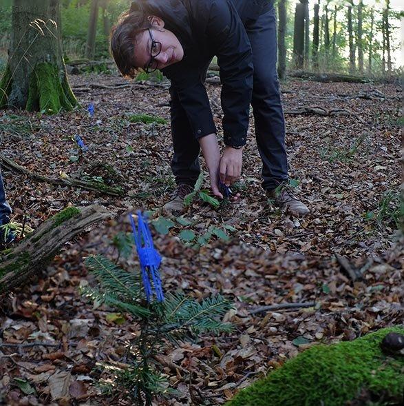 Waldeinsatz Weisstannenschutz - Jan