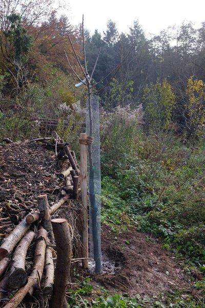 Hochstamm-Obstbäume auf den Etzwiesen 2
