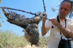 Vogelmord Waldohreule an Leimrute