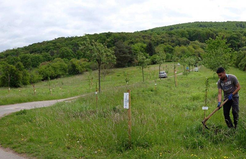 Kirschgarten 13