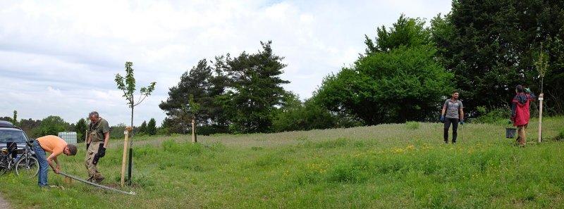 Kirschgarten 03
