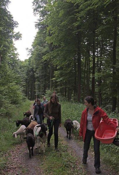Schaftrieb - Wald 07