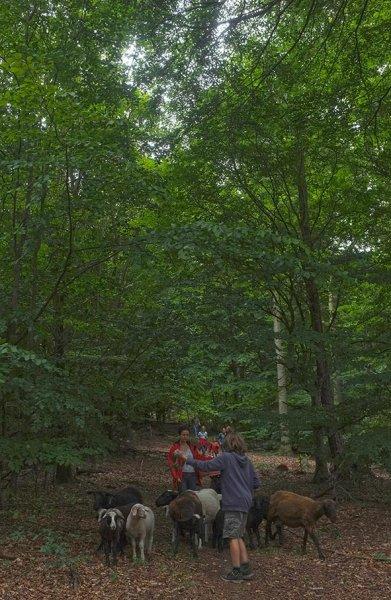 Schaftrieb - Wald 08