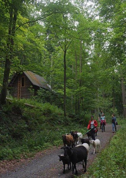 Schaftrieb - Wald 09