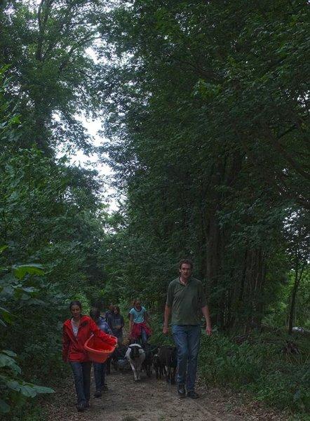 Schaftrieb - Wald 02