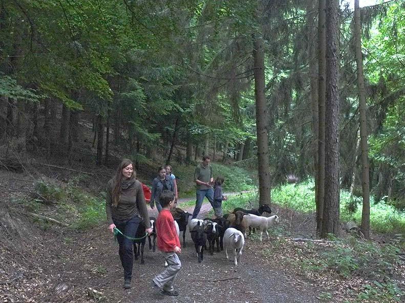 Schaftrieb - Wald 05