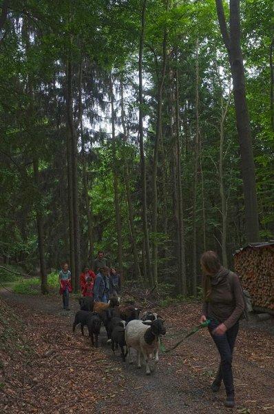 Schaftrieb - Wald 06