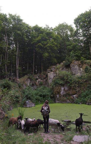 Schaftrieb - Wassersteinbruch 08