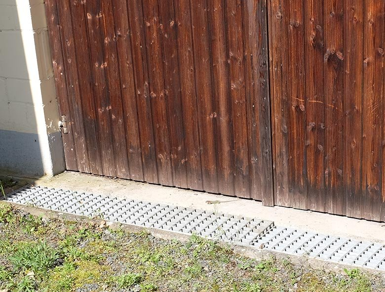 Mauereidechse an der NABU-Garage 1
