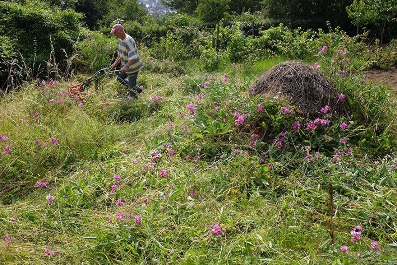 Orchideenwiesen 06