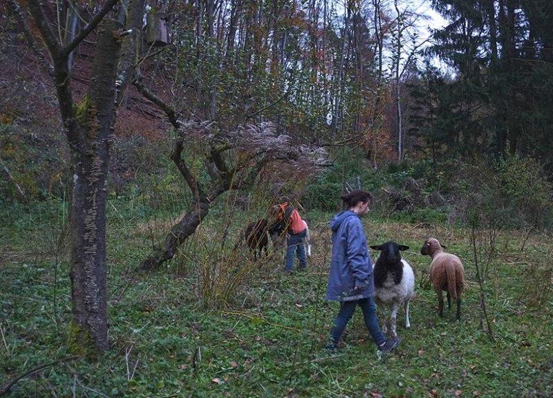 Schafweide Etzwiesen 1