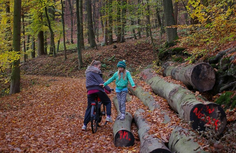 Sternwanderung - Gymnastik im Wald 01