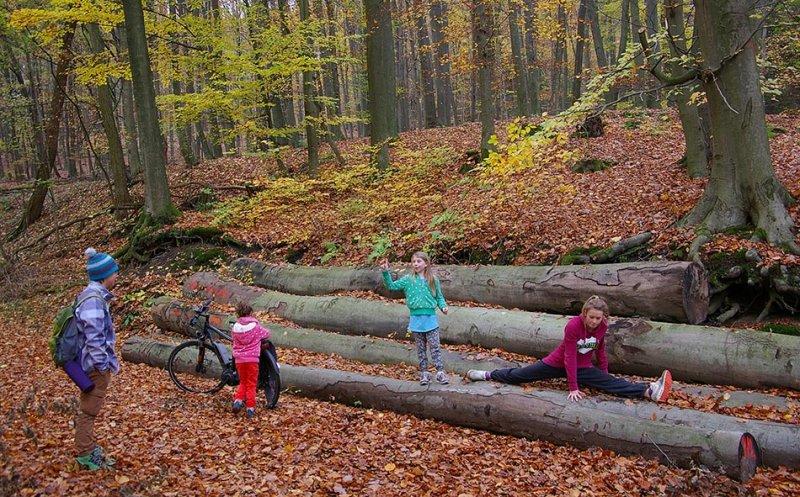 Sternwanderung - Gymnastik im Wald 12