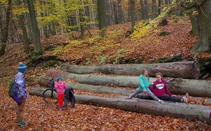 Sternwanderung - Gymnastik im Wald 13