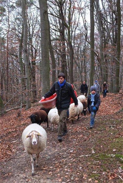 Waldwanderung mit Schafen 05 10x14s