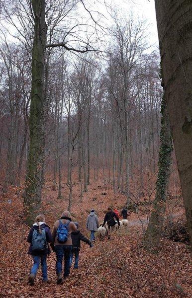 Waldwanderung mit Schafen 06 10x15s