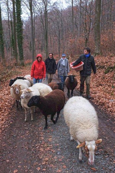 Waldwanderung mit Schafen 14 10x14s