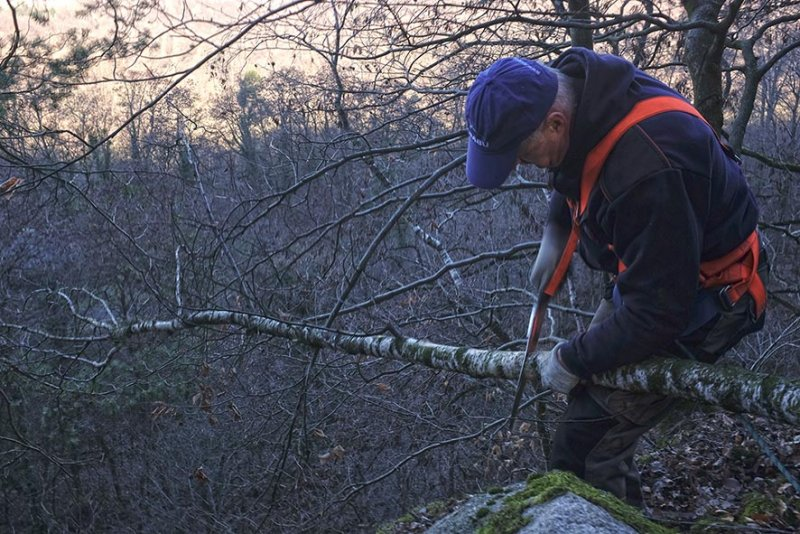 An der Abbruchkante 05 toter Baum 10x15s