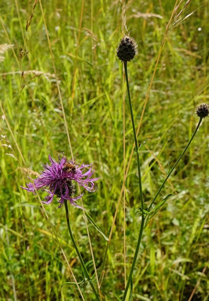 Mäheinsatz am Blütenhang Seeheim 12